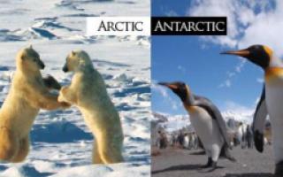 Антарктида и Арктика: в чём отличия