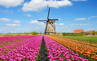 Зарплаты и налоги в Голландии (Нидерландах) в 2019-2020 годах