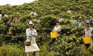 Крупнейшие страны производители кофе в мире: рейтинг 2020 года