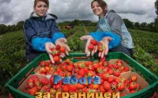 Сезонная работа и вакансии за границей для русских в 2020 году