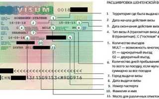 Типы и виды шенгенских для россиян в 2020 году: категории С mult 90 и D